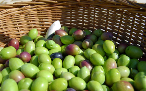 Green Olives in Basket
