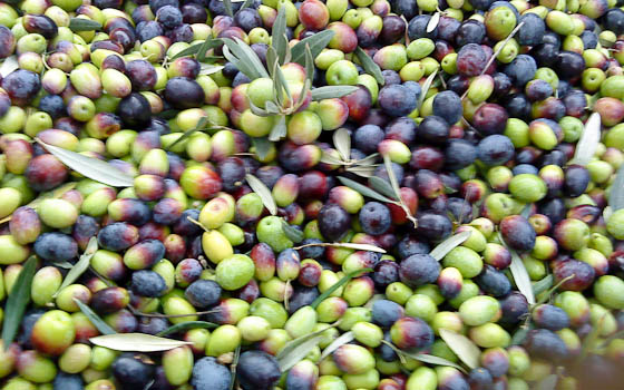 Olives2
