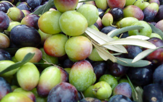 Olives3