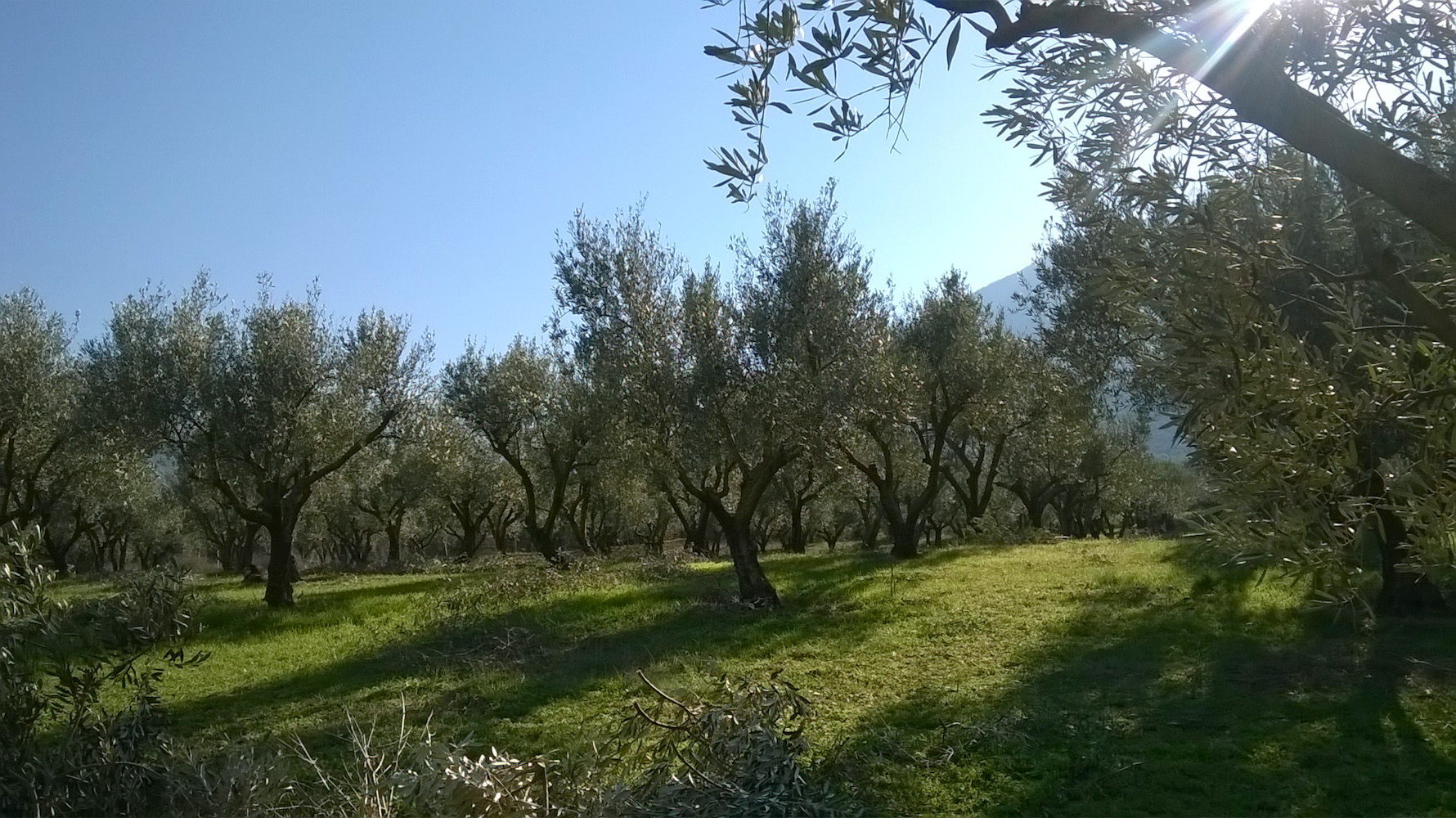 Efthimiadi Estate Eliris
